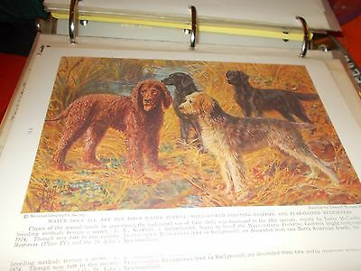 EH Miner Irish Water Spaniel, Griffon Flat-Coat Retriever bookplate 1937 Nat Geo
