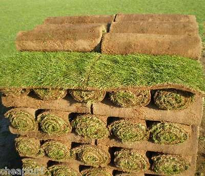 Cheap Turf: Fresh/Real Garden Lawn Grass Rolls now from only £2.22 per sq.metre