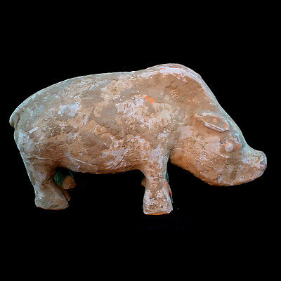 Han dynasty painted pottery boar, Circa 202 B.C. to 220 A.D., China x9769
