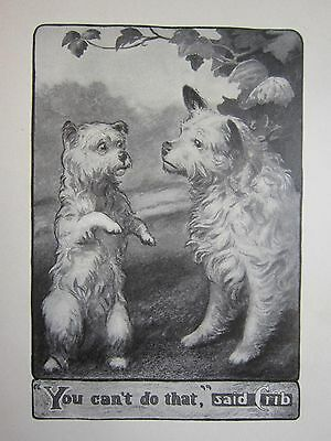 Skye & Manchester Tale of Terriers : Crib & Fly 1905 book by Welsh illustrated
