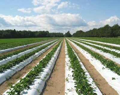 "Plastic Mulch Row Cover 48""x2400ft 1.25mil White & Black Weed Barrier Strawberry"