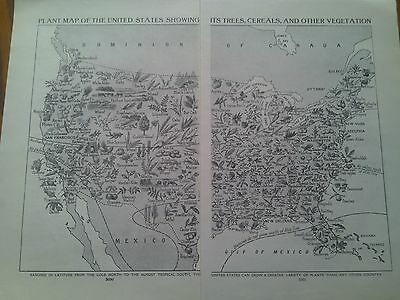 1924 Map of Trees Cereals Vegetation America USA 2 Small Pages to Frame