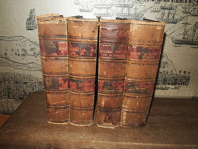 1898 The Natural History Of Animals By Ainsworth Davis 4 Vols Col Plates