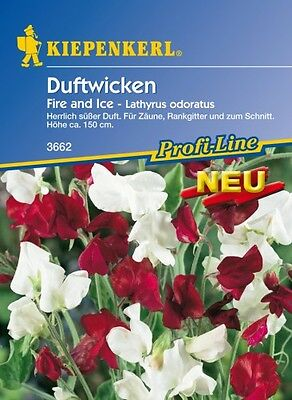 Duftwicken Fire and Ice
