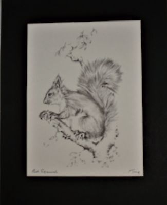 Red Squirrel Drawing in Pencil by Fred King
