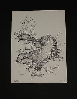 Otter Drawing in Pencil by Fred King
