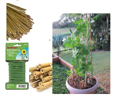 BAMBOO STRONG GARDEN CANES SUPPORT PLANTS 2ft 3ft 4ft 5ft 6ft + 5M SOFT TWIS TIE