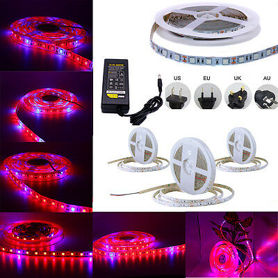 SMD 5050 LED Strip Grow Light Lamp Full Spectrum For Plant Veg / DC / 12V Power