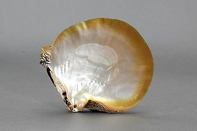 :: A Arawe Pearl Shell Wealth Object, New Britain