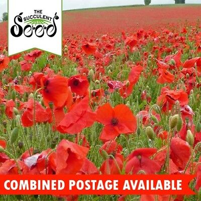 POPPY - Flanders Red (15000 Seeds) BULK Heirloom BEDS & BORDERS Cool Season