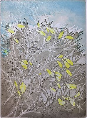 ORIGINAL LIMITED EDITION LITHOGRAPH SIGNED DORA McCAVERA PRINT WHIM BUSHES 1/10