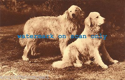 Antique Sepia Photo~Two Great Pyrenees Dog Dogs~ NEW Large Note Cards