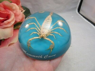 Vtg Mammoth Caves Souvenir REAL scorpion lucite paperweight. KY