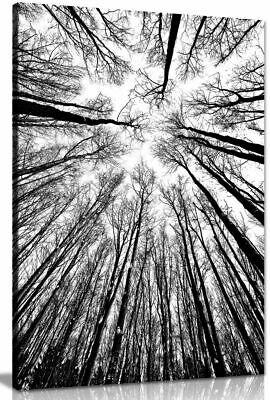Abstract Modern Art Home Black & White Trees Canvas Wall Art Picture Print