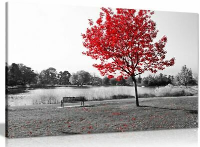 Large Tree Red Leaves Black White Park Bench Nature Canvas  Picture Print