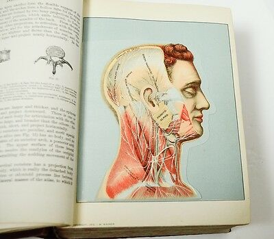 Antique Book 1918 Domestic Medical Practice Color Layered Anatomy Illustrated