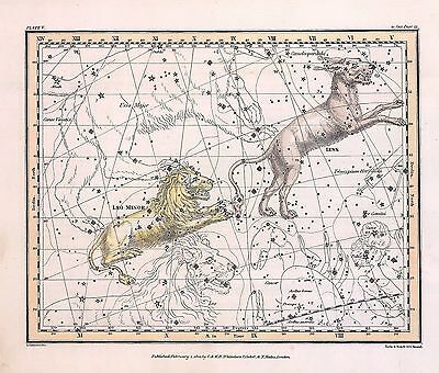 1822 ASTROLOGY ATLAS Print poster old lynx LITTLE LION constellation ZODIAC 13