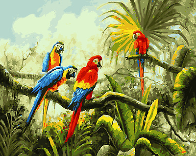 Paint By Numbers Kit Canvas 50*40cm A006 Rainbow Lorikeets AU Stocks Oz Themes