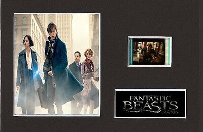 Fantastic Beasts And Where To Find Them replica 35mm Mounted Film Cell6 x 4