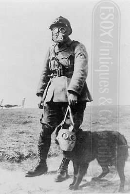 French Soldier Dog with anti-gas mask photo photograph 4x6 WWI