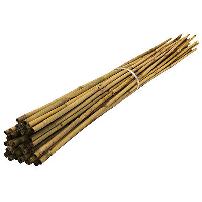 Bamboo Canes 2.1m/ 210cm/ 7ft, 12-14mm Thick Garden Plant Support Poles, 50pack