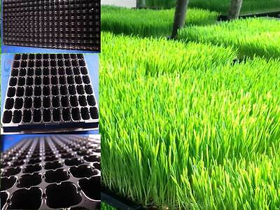 200 Cells x 5 PCS Seed Starting plug Tray  hydroponics