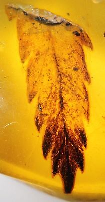 Burmese Amber, Fossil Insect Inclusion, High quality leaf (SKU #A5-613)