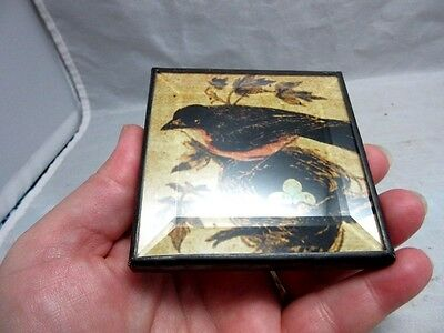 Beveled glass over robin ,eggs bird print small, square hand mirror
