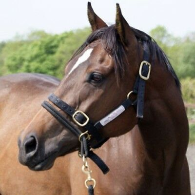 Monty Roberts DUALLY Halter Horse Riding