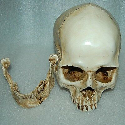 New Hot-sale Halloween Human Medical Skull Resin Model Realistic Property