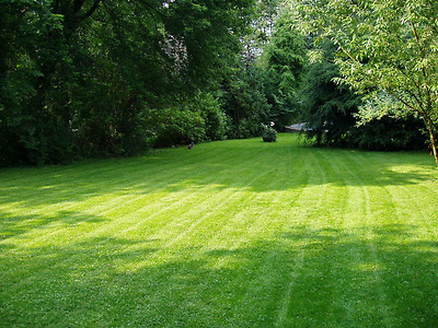 SHADED AREA UNDER TRAMPOLINES TREES BUSHES GRASS SEED LAWN SHADE 5 kg
