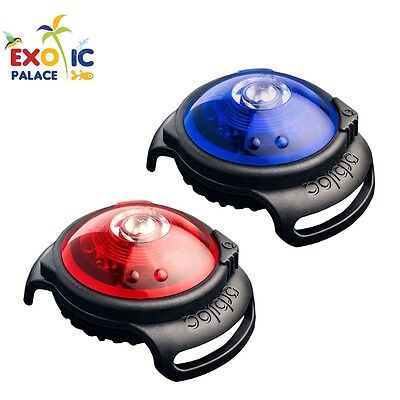 Orbiloc Dog Dual Luce Led Luminosa Di Sicurezza Per Guinzaglio Collare Cane Safe