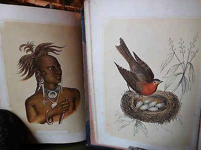 c.1851 OVER 300 COLOUR PLATES ANIMALS - NATURAL HISTORY OF THE SACRED SCRIPTURES