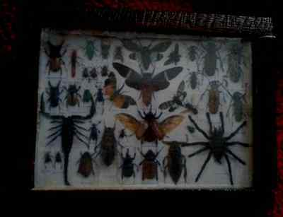 Dolls House Big Bug collections  picture