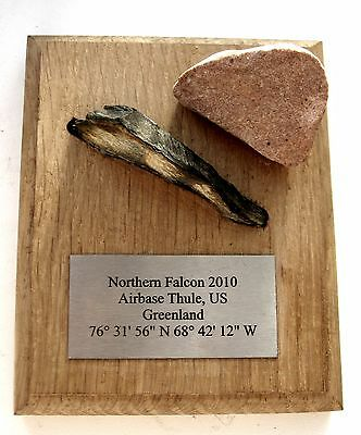 US Airbase Thule Arctic Greenland Award Plaque Northern Falcon 2010 Air Force