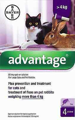 Advantage 80 Spot-On Flea Solution Treatment for Large Cats & Rabbits over 4kg