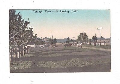Australia VICTORIA Postcards, TERANG, ESCOURT ST Looking North  Vic