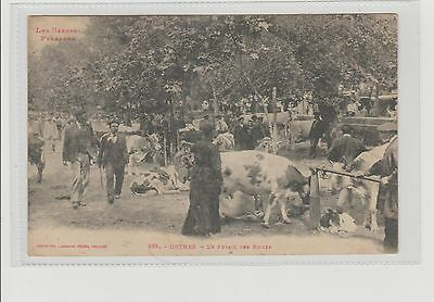 France Pyrennes Orthez Beef/Cattle Market Animated Scene Posted 5/10/1919