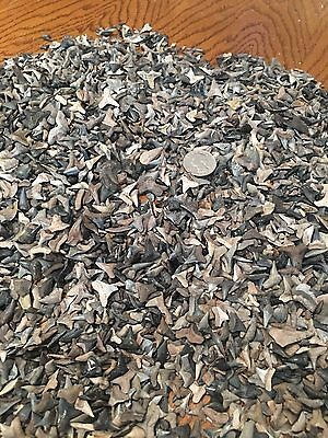 100 Shark Teeth Lot, Plus 50 Sting Ray Mouth Plates