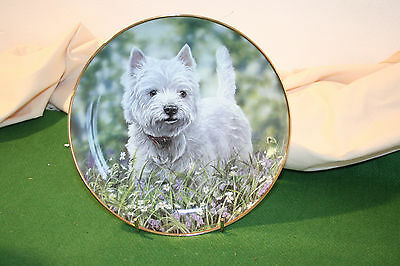 "Danbury mint Westie collection plate with certificate  ""The Bluebell trail"""