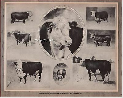HEREFORD CATTLE PRIZE WINNING by George Ford Morris Vintage ART Print 1952