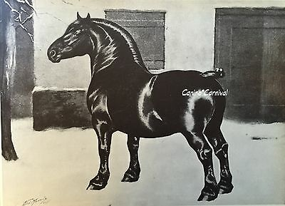 IMPORTED Belgian Draft HORSE TRAPPISTE by George Ford Morris ART PRINT 1952