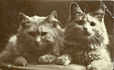 Two Cats Posing 1917 Valentine Real Photo Postcard