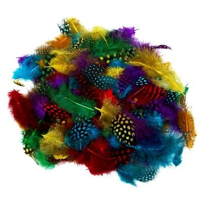 Spotted Feathers Assorted Colours 7g