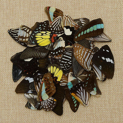 50 Pcs Real Butterfly's Wings Material DIY Artwork Jewelry Handmade New Random