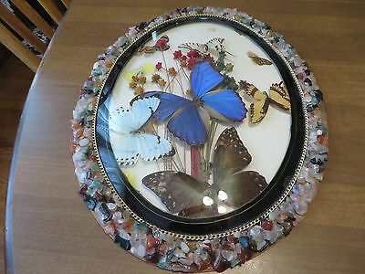 Vintage Real Butterfly Collection In OVAL  Frame 3D