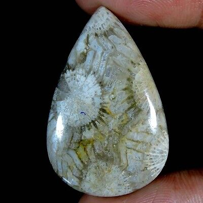 34.55cts NATURAL BEST QUALITY DESIGNER FOSSIL CORAL PEAR CABOCHON PURE GEMSTONE