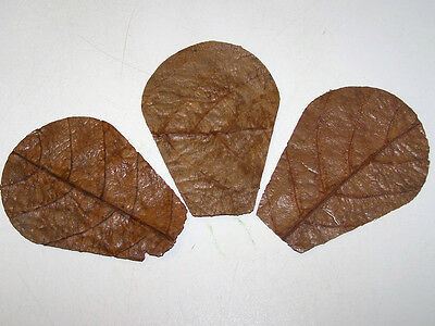 10 Nano Indian Almond (Catappa) Leaf Segments - Bettas, Shrimps, Apistos, etc.