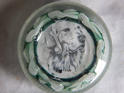 Attractive Scottish glass paperweight featuring a labrador dog