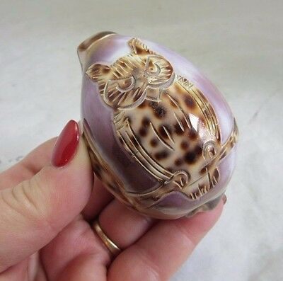 Carved cowrie sea shell with Owl. Very Nice